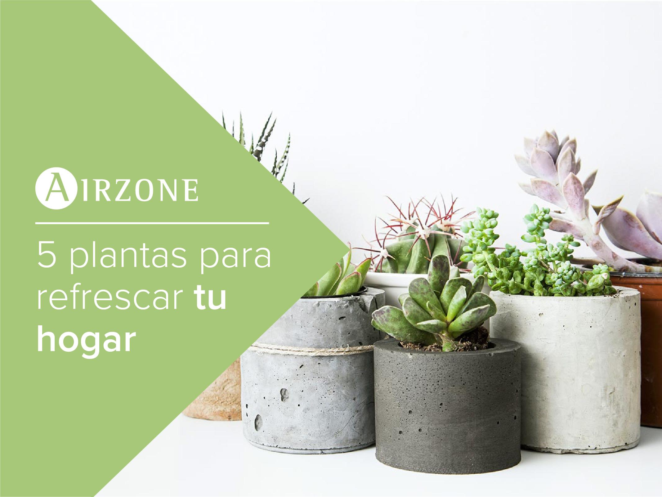 Plantas para refrescar